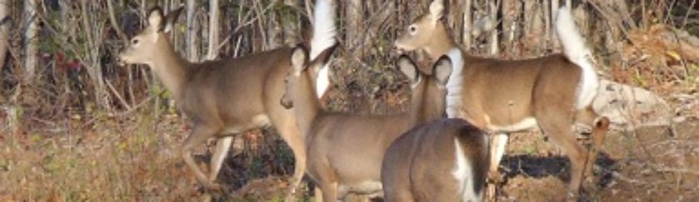 Lowndes County Wildlife Federation  (Home Page)